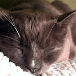 Katt som inte fått sina åtta timmar
