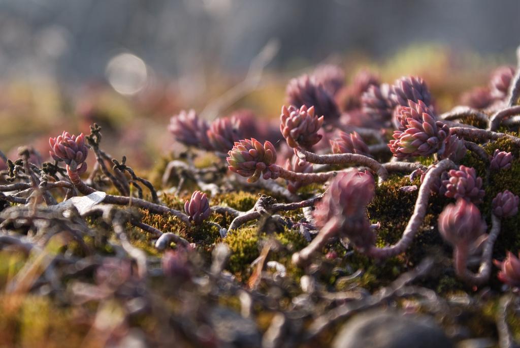 Bildkälla: http://www.flickr.com/vauvau/