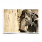 När det kommer till målsättning har vi vissa likheter med elefanter Foto: ArranET på flickr.com