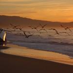 Även en destinationschef kan behöva en promenad längs stranden Foto: Damian Gadal på flickr.com